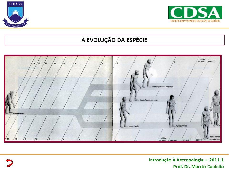 A EVOLUÇÃO DA ESPÉCIE Introdução à Antropologia – 2011.1