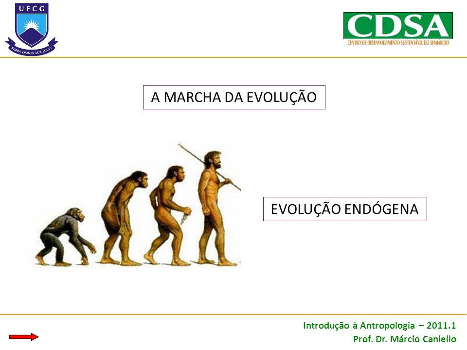 A MARCHA DA EVOLUÇÃO EVOLUÇÃO ENDÓGENA