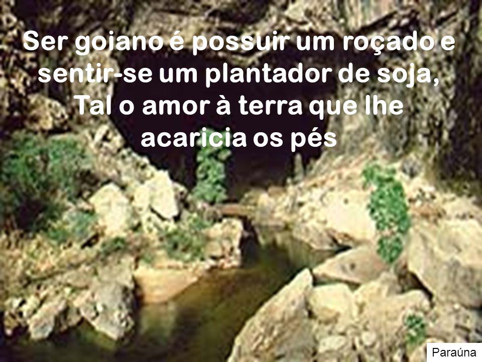 Ser goiano é possuir um roçado e sentir-se um plantador de soja, Tal o amor à terra que lhe acaricia os pés