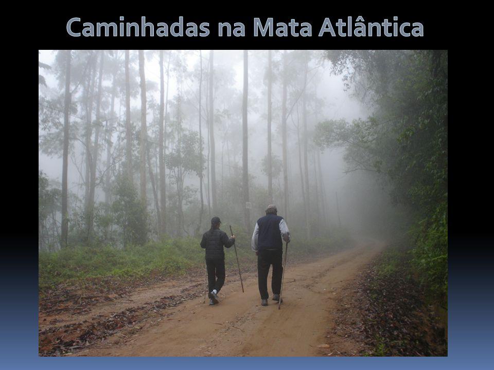 Caminhadas na Mata Atlântica