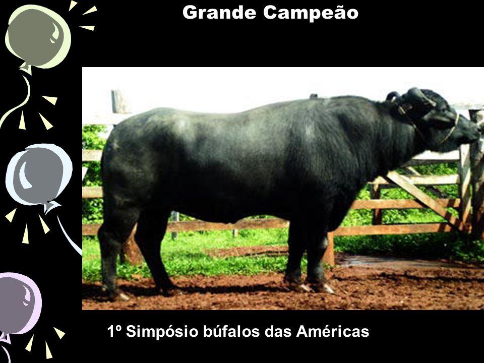1º Simpósio búfalos das Américas