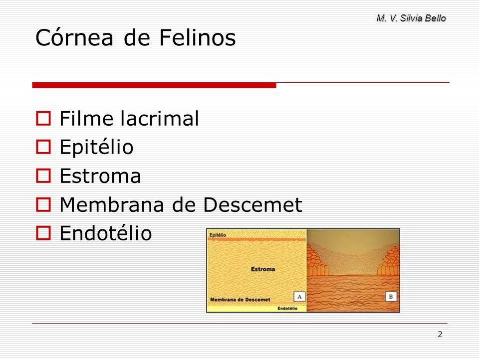 Córnea de Felinos Filme lacrimal Epitélio Estroma Membrana de Descemet