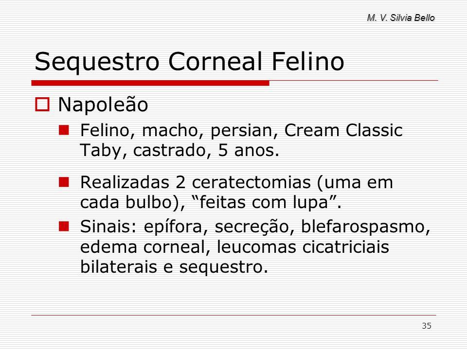 Sequestro Corneal Felino