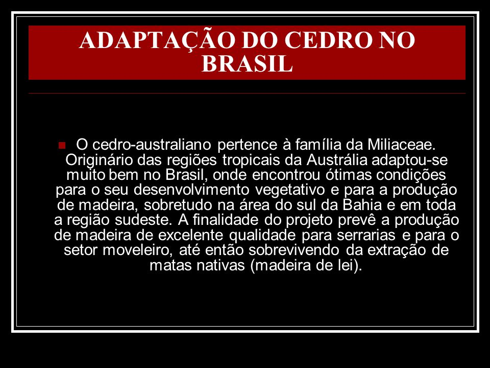 ADAPTAÇÃO DO CEDRO NO BRASIL