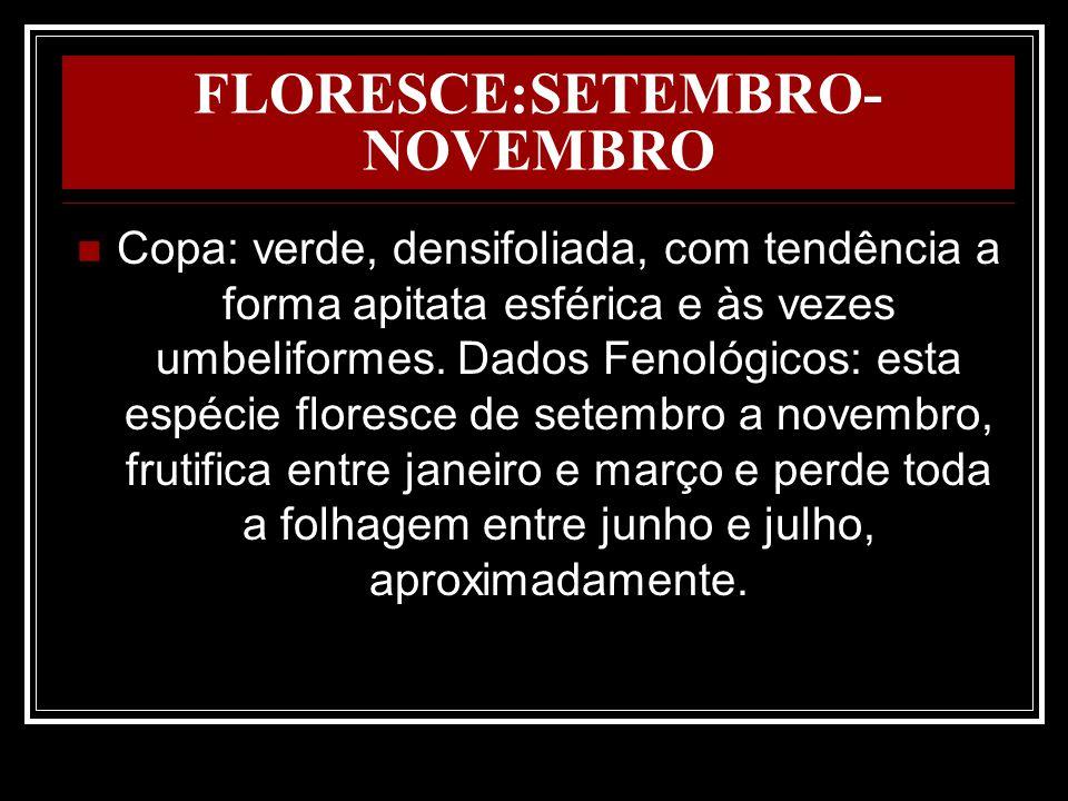 FLORESCE:SETEMBRO-NOVEMBRO