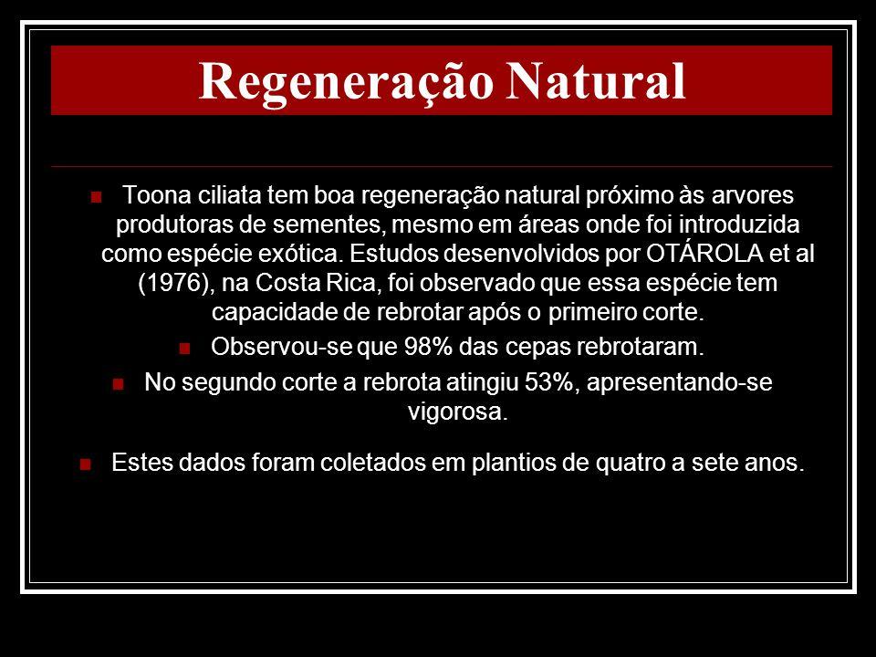 Regeneração Natural