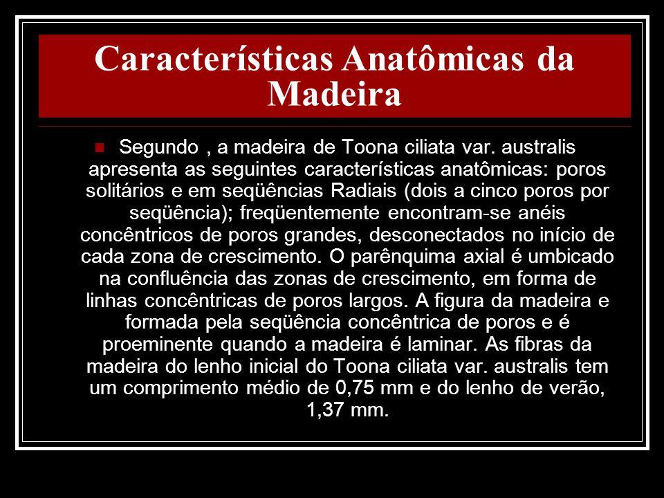 Características Anatômicas da Madeira