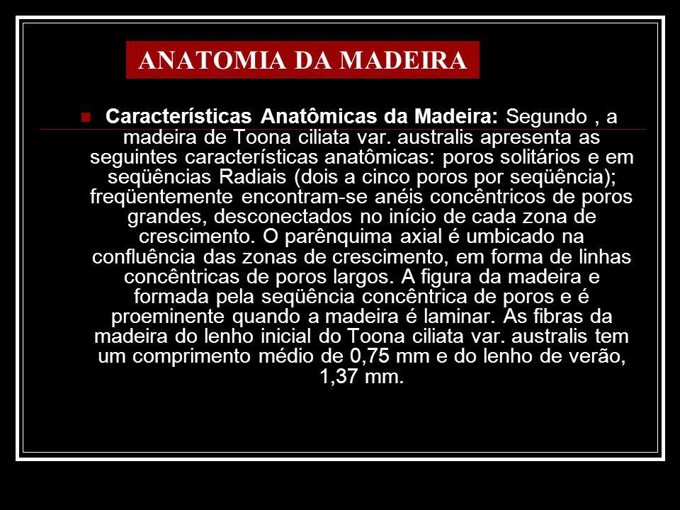 ANATOMIA DA MADEIRA