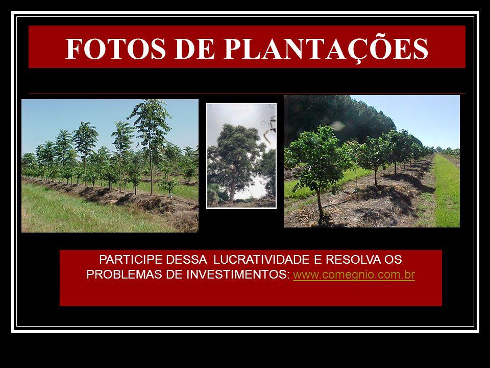 FOTOS DE PLANTAÇÕES PARTICIPE DESSA LUCRATIVIDADE E RESOLVA OS PROBLEMAS DE INVESTIMENTOS: www.comegnio.com.br.