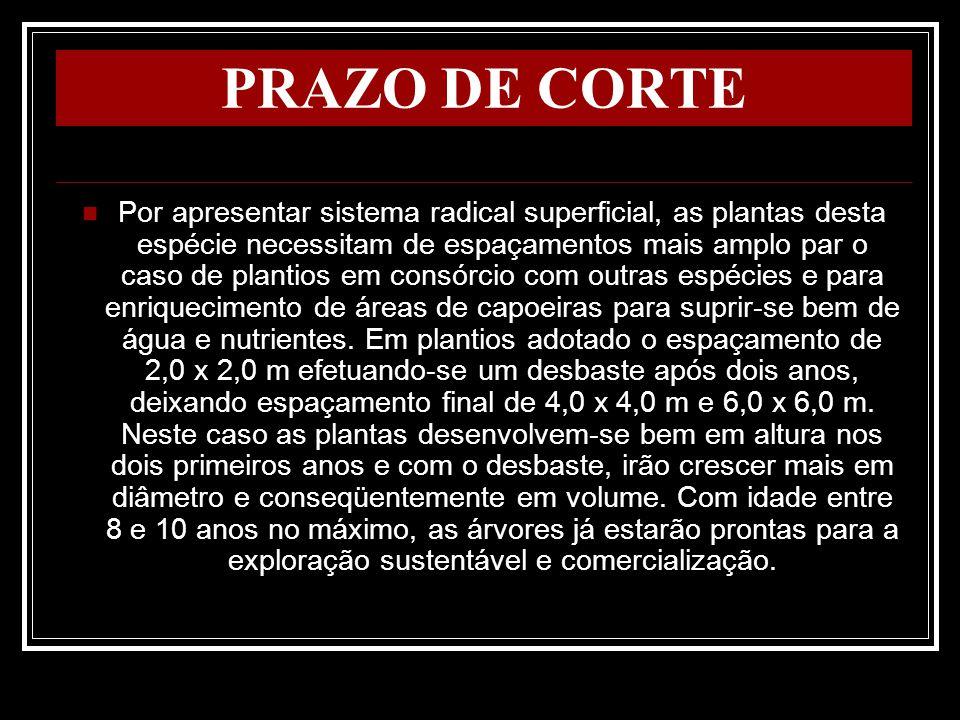 PRAZO DE CORTE