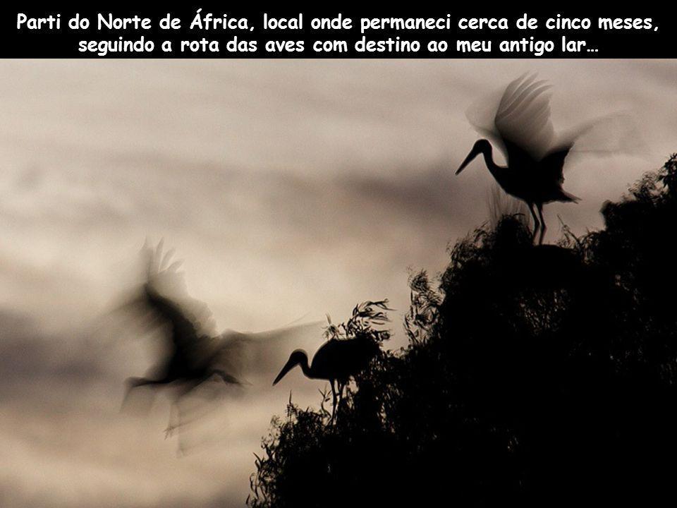 Parti do Norte de África, local onde permaneci cerca de cinco meses, seguindo a rota das aves com destino ao meu antigo lar…