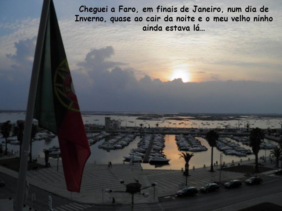 Cheguei a Faro, em finais de Janeiro, num dia de Inverno, quase ao cair da noite e o meu velho ninho ainda estava lá…