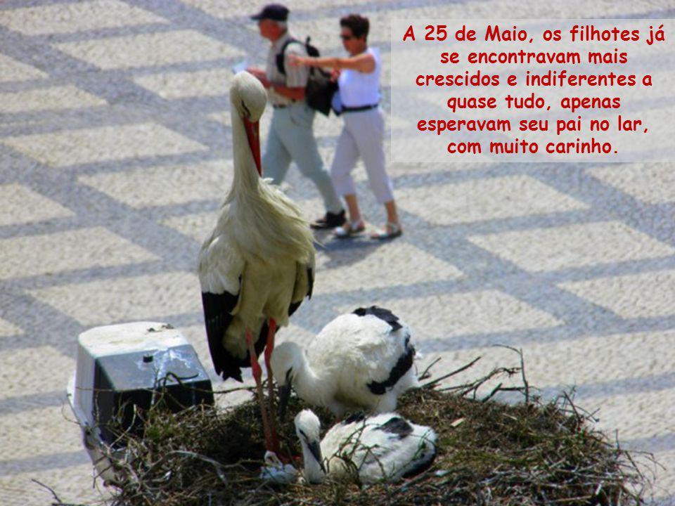 A 25 de Maio, os filhotes já se encontravam mais crescidos e indiferentes a quase tudo, apenas esperavam seu pai no lar, com muito carinho.