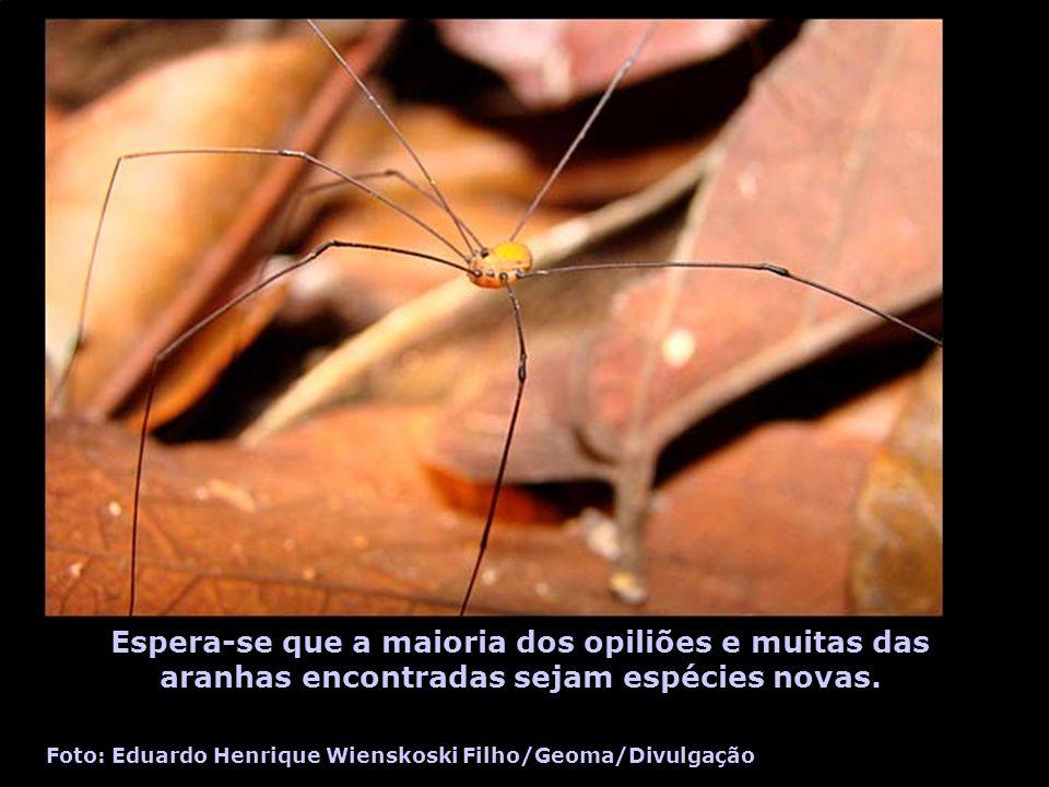Espera-se que a maioria dos opiliões e muitas das aranhas encontradas sejam espécies novas.