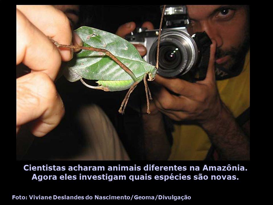 Cientistas acharam animais diferentes na Amazônia