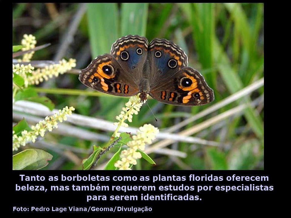 Tanto as borboletas como as plantas floridas oferecem beleza, mas também requerem estudos por especialistas para serem identificadas.