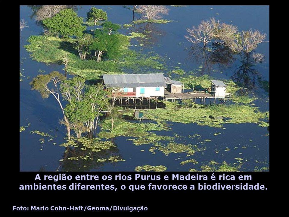 A região entre os rios Purus e Madeira é rica em ambientes diferentes, o que favorece a biodiversidade.