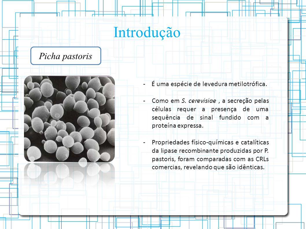 Introdução Picha pastoris - É uma espécie de levedura metilotrófica.
