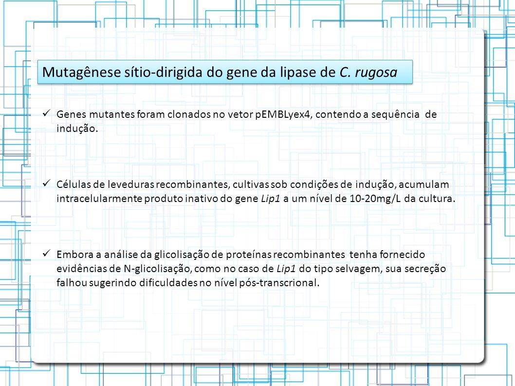 Mutagênese sítio-dirigida do gene da lipase de C. rugosa