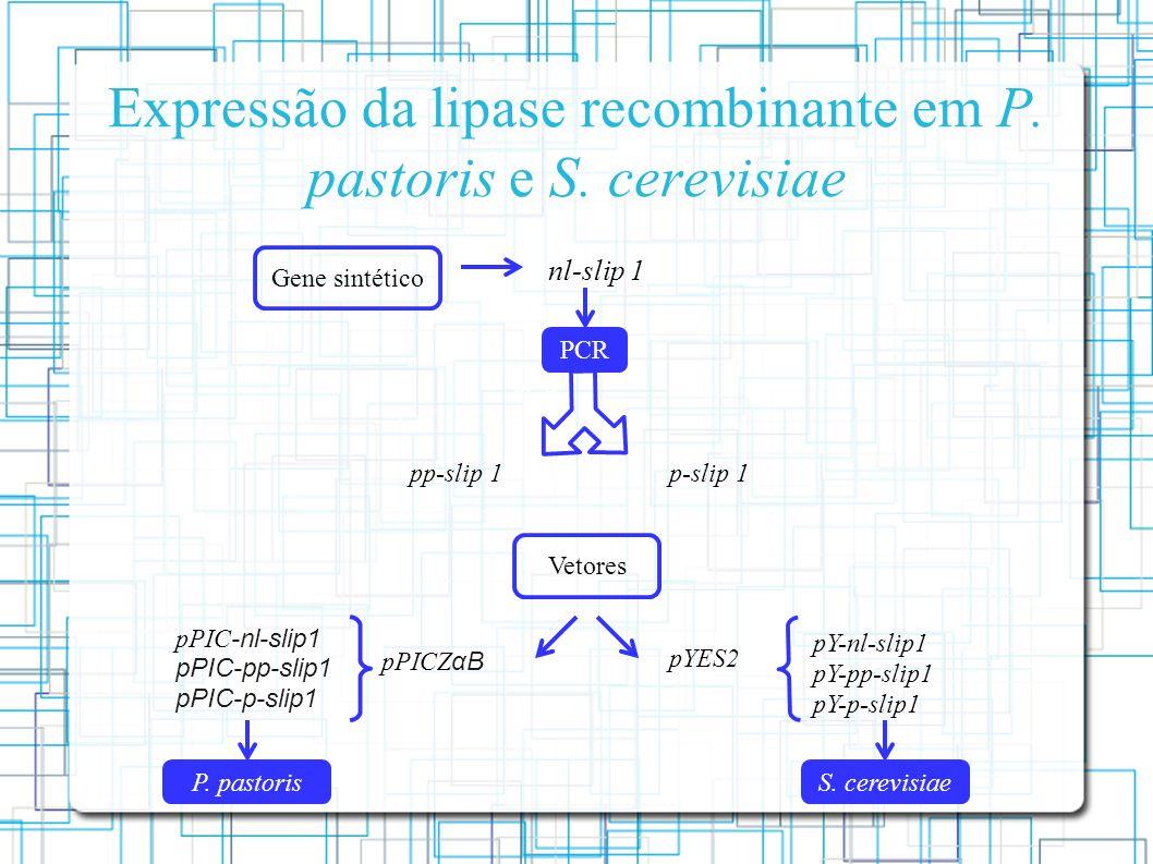 Expressão da lipase recombinante em P. pastoris e S. cerevisiae