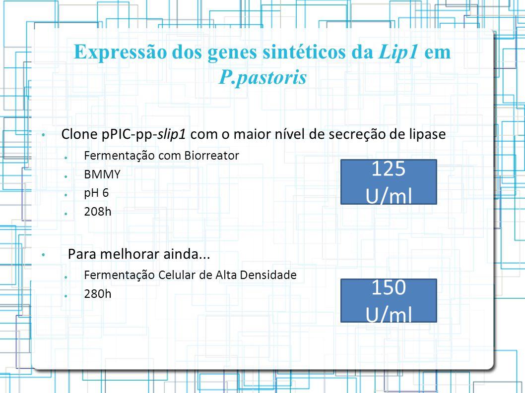 Expressão dos genes sintéticos da Lip1 em P.pastoris