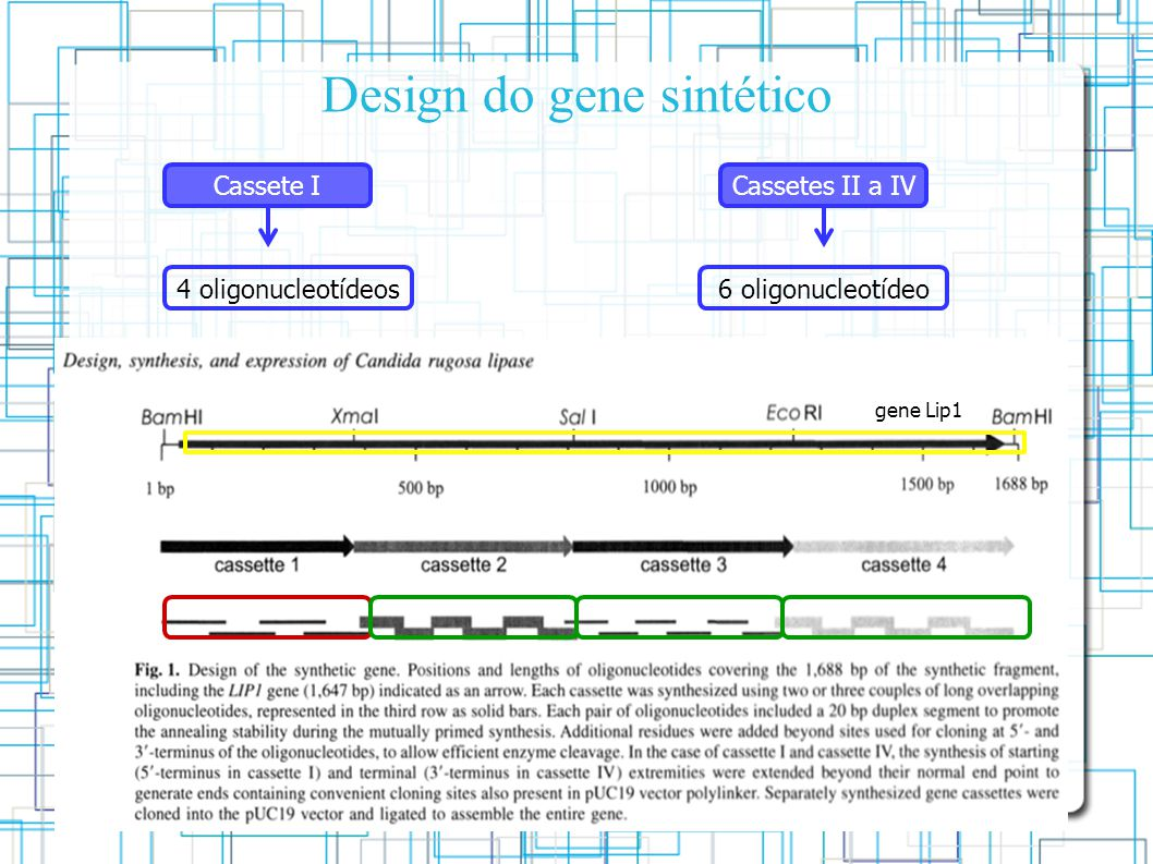 Design do gene sintético