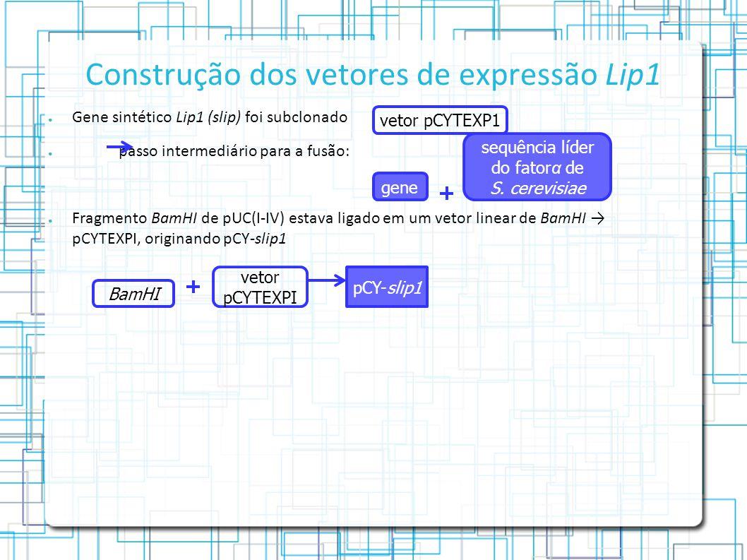 Construção dos vetores de expressão Lip1