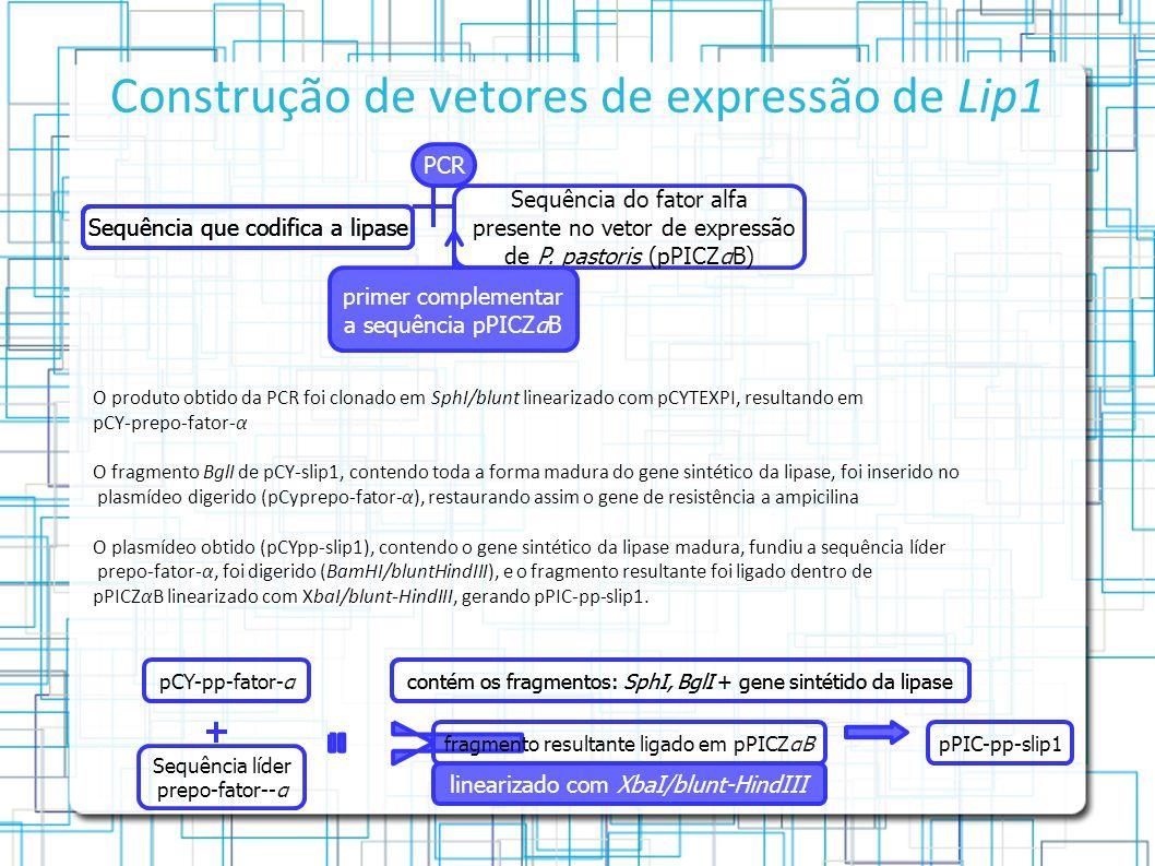 Construção de vetores de expressão de Lip1