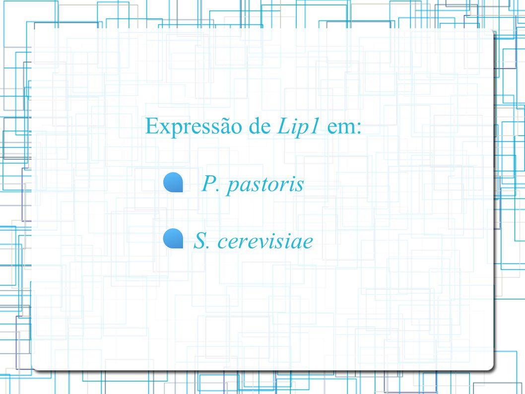 Expressão de Lip1 em: P. pastoris S. cerevisiae