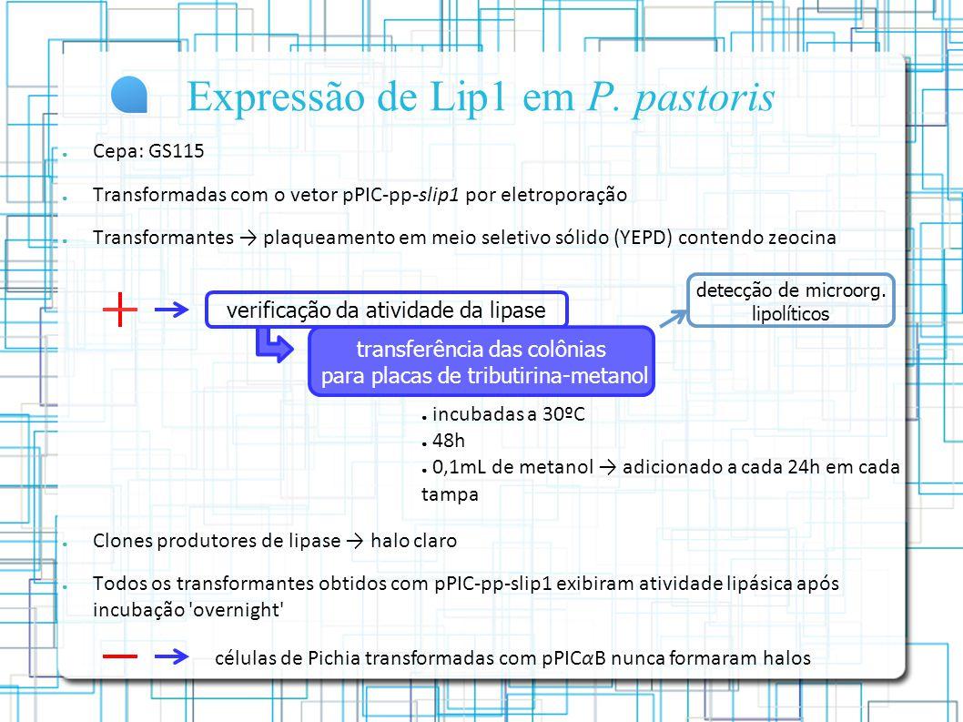 Expressão de Lip1 em P. pastoris
