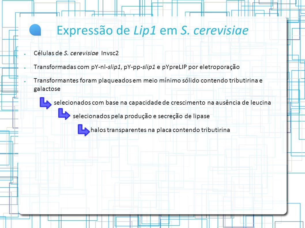 Expressão de Lip1 em S. cerevisiae