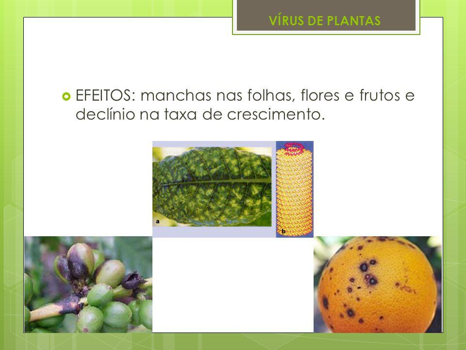 VÍRUS DE PLANTAS EFEITOS: manchas nas folhas, flores e frutos e declínio na taxa de crescimento.