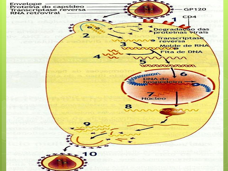 1 – Entrada do vírus na célula – GP 120 + CD4