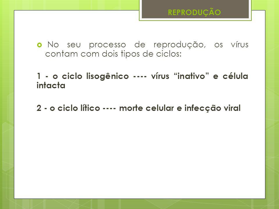 1 - o ciclo lisogênico ---- vírus inativo e célula intacta