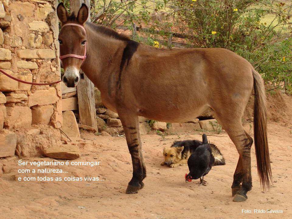 Foto: Rildo Silveira Ser vegetariano é comungar com a natureza...