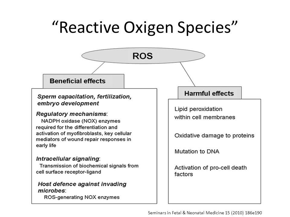 Reactive Oxigen Species