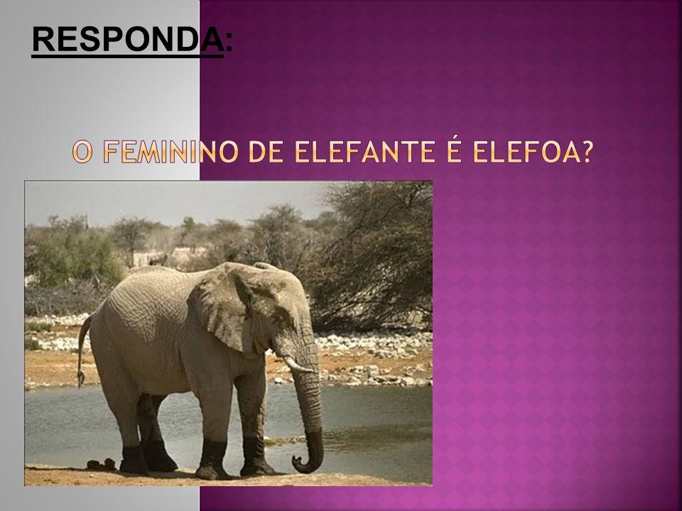 O feminino de elefante é elefoa