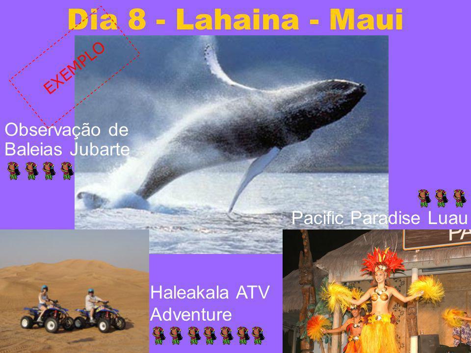 Dia 8 - Lahaina - Maui Observação de Baleias Jubarte