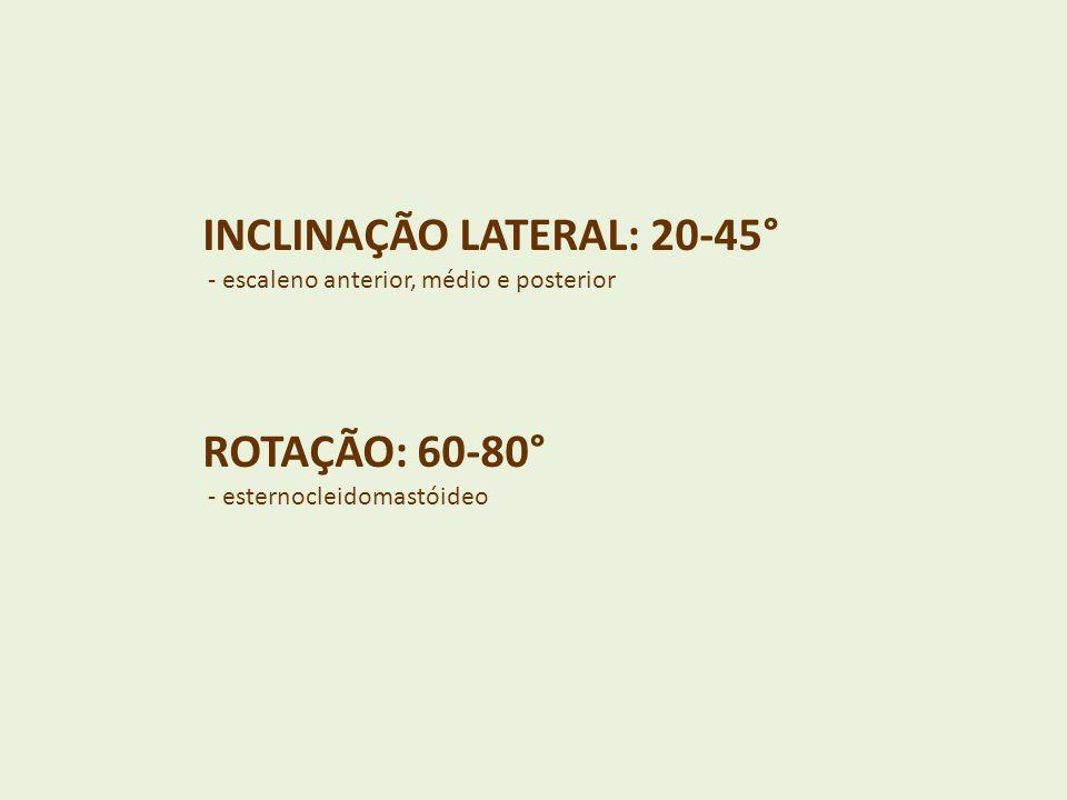 INCLINAÇÃO LATERAL: 20-45°