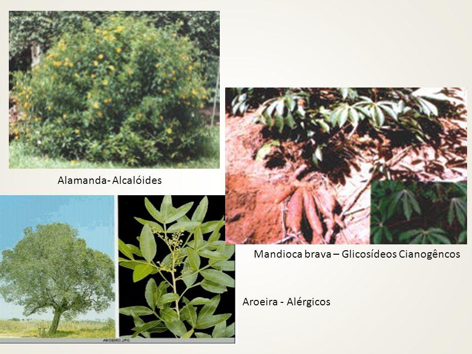Alamanda- Alcalóides Mandioca brava – Glicosídeos Cianogêncos Aroeira - Alérgicos