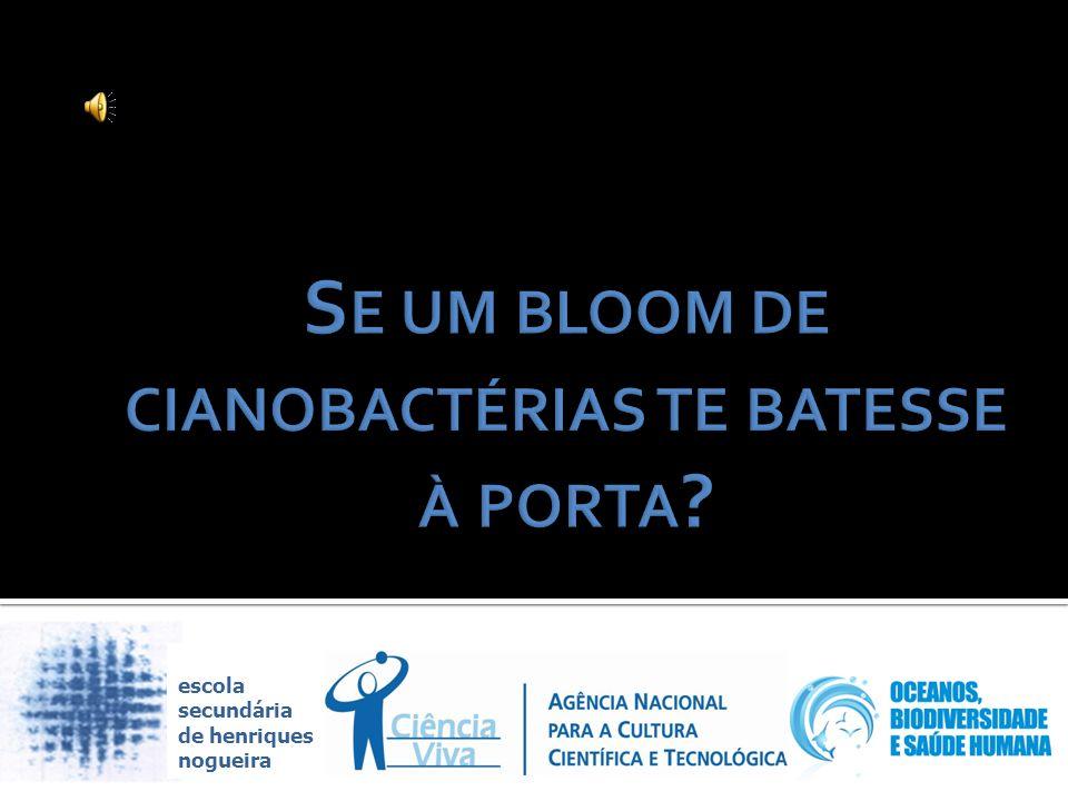 Se um bloom de cianobactérias te batesse à porta