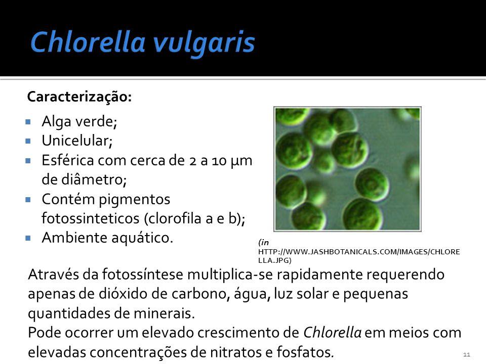 Chlorella vulgaris Alga verde; Unicelular;