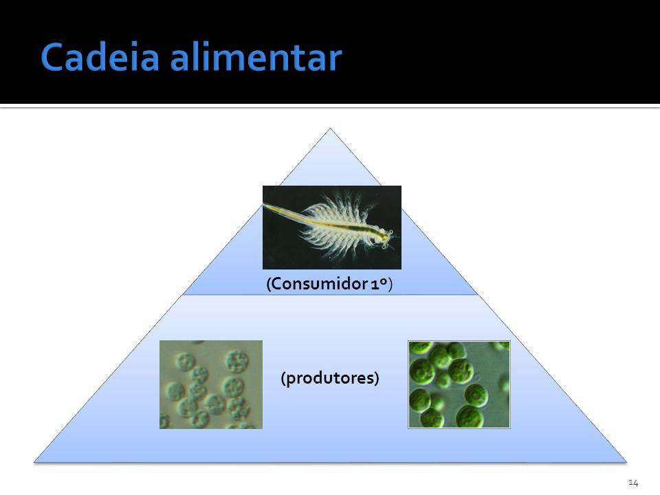 Cadeia alimentar (Consumidor 1º) (produtores)