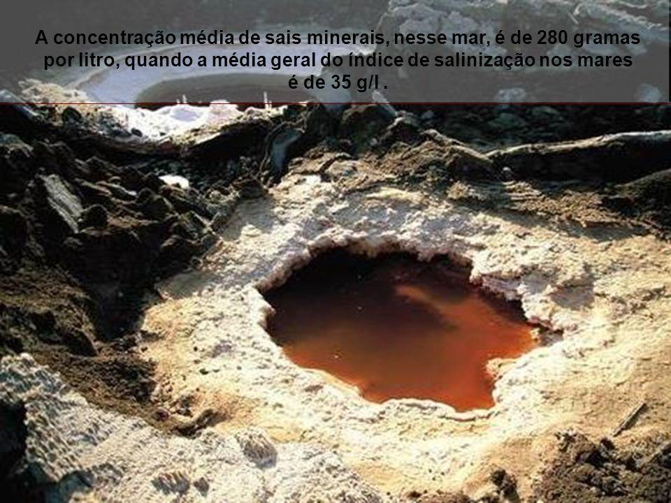 A concentração média de sais minerais, nesse mar, é de 280 gramas por litro, quando a média geral do índice de salinização nos mares