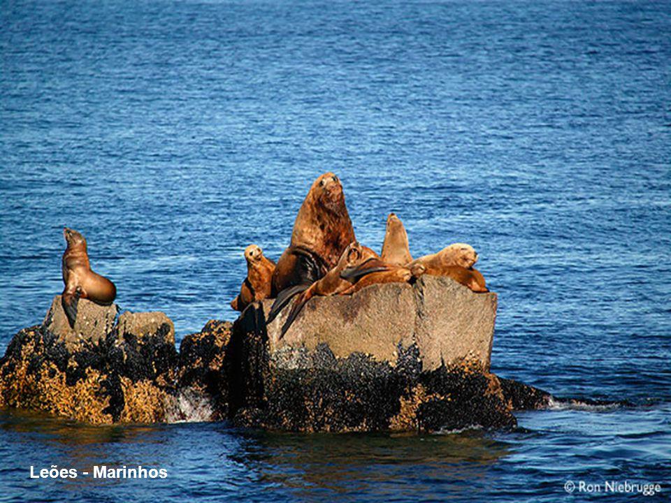 Leões - Marinhos
