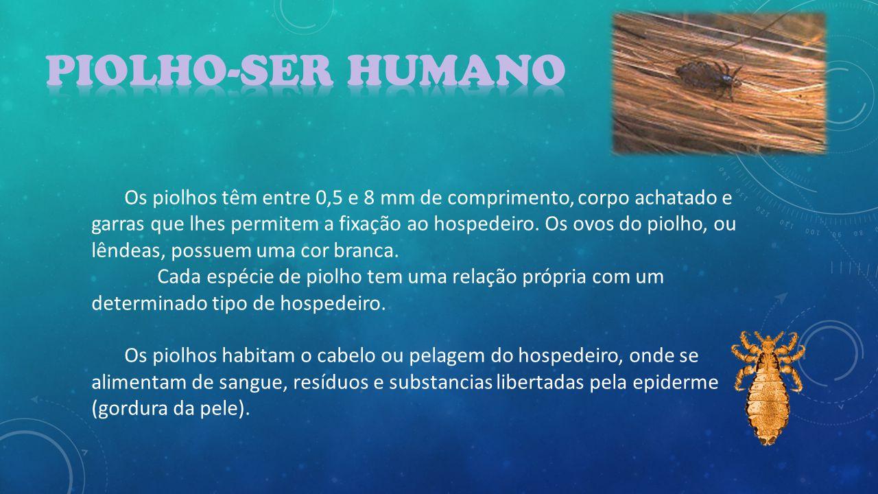 Piolho-Ser Humano