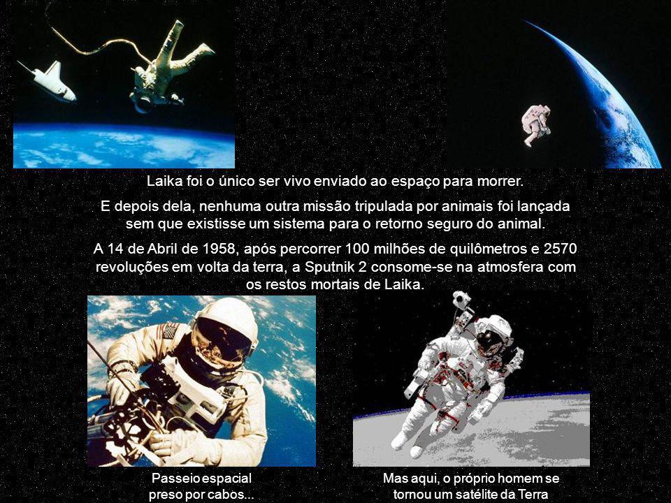Laika foi o único ser vivo enviado ao espaço para morrer.