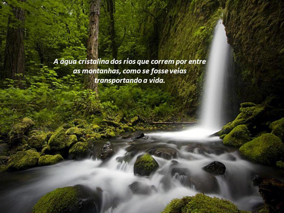 A água cristalina dos rios que correm por entre as montanhas, como se fosse veias transportando a vida.