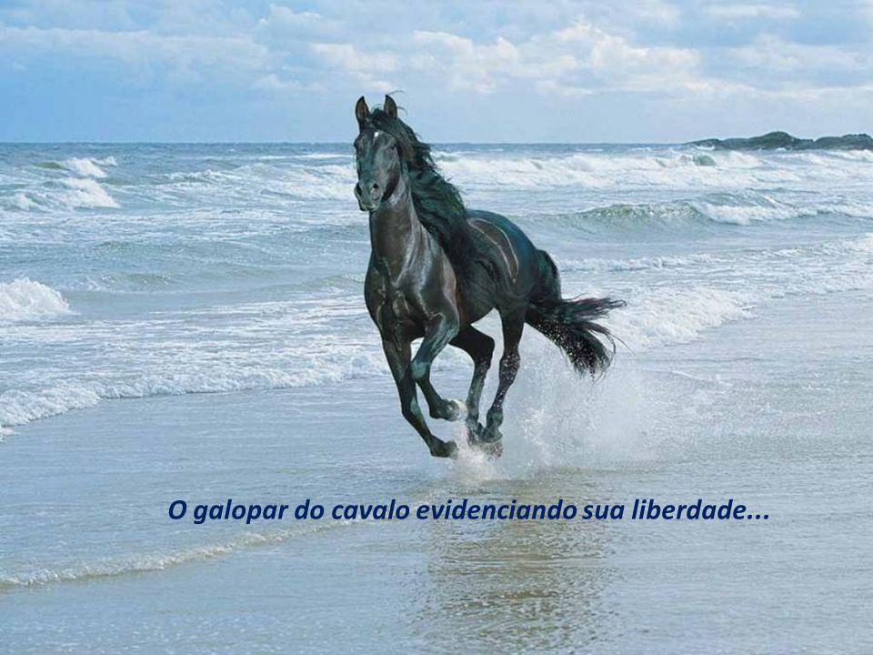O galopar do cavalo evidenciando sua liberdade...