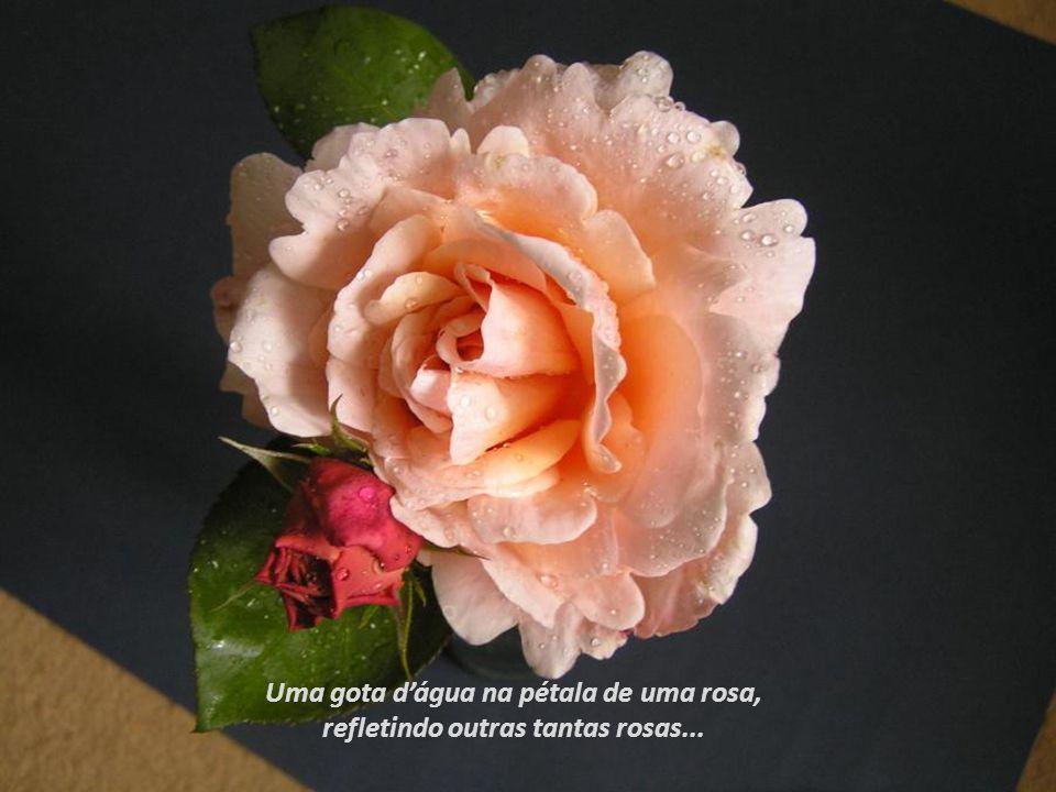 Uma gota d'água na pétala de uma rosa,